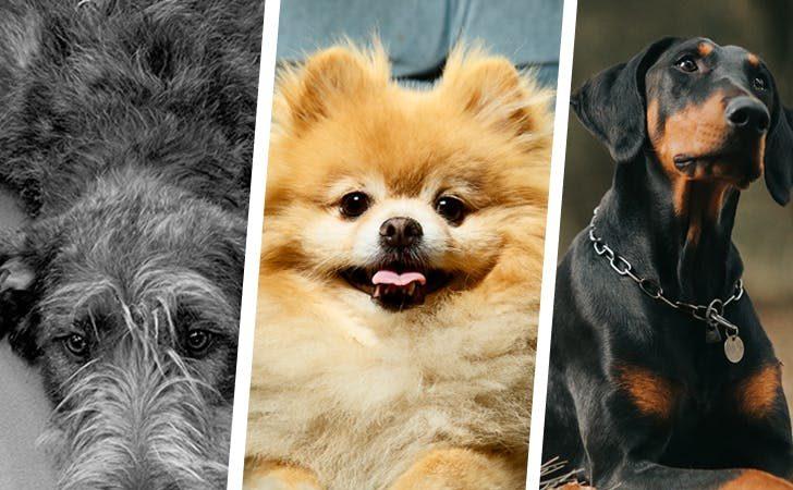 three types of dogs